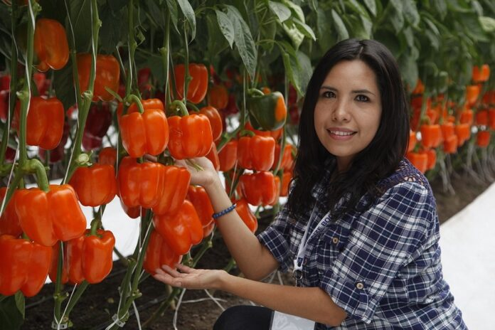 Export of agro-foods grows